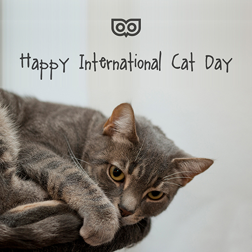 August 8 - International Cat Day