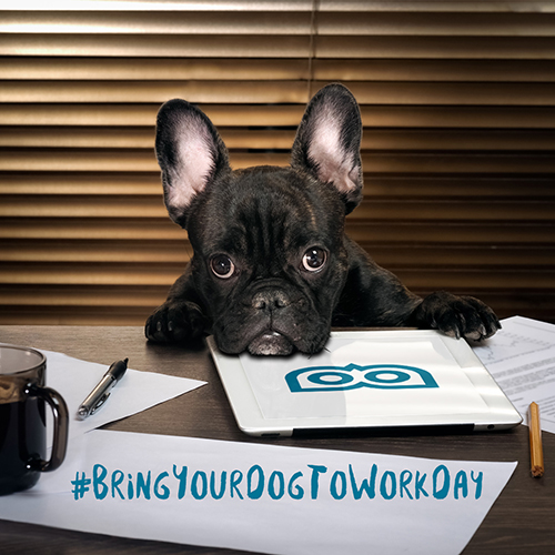 June 23 - Bring your Dog to Work Day