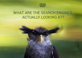 What are the search engines looking at?