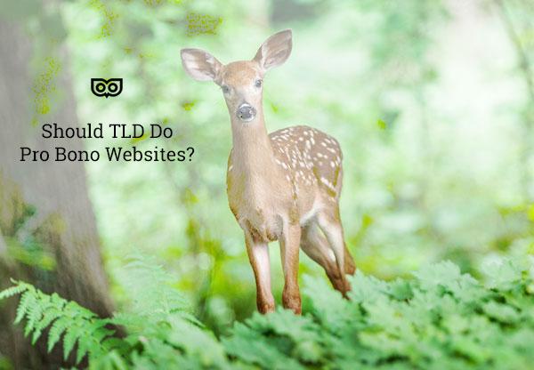 Should TLD do Pro Bono Websites?
