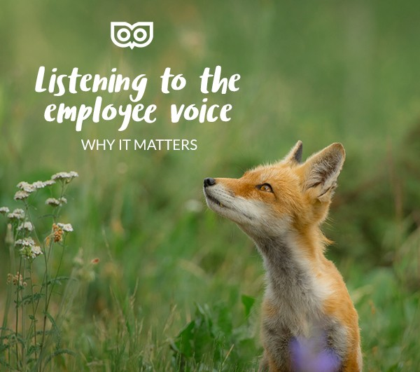 Why you should listen to the employee voice